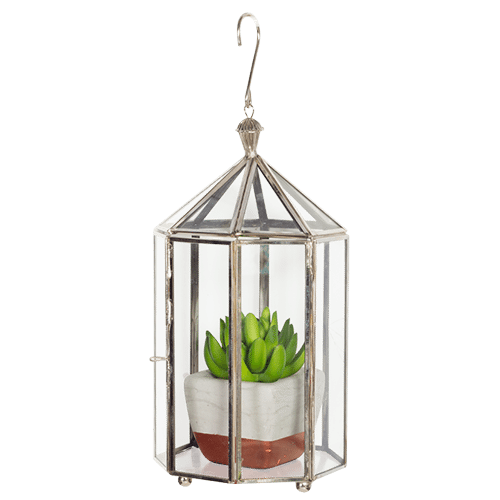 Hanging Terrarium Available Online Or In Store From Bimbo Adelaide